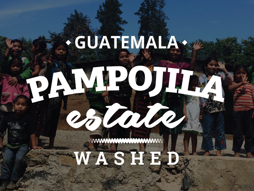GUATEMALA COFFEE - PAMMPOJILA ESTATE - WASHED